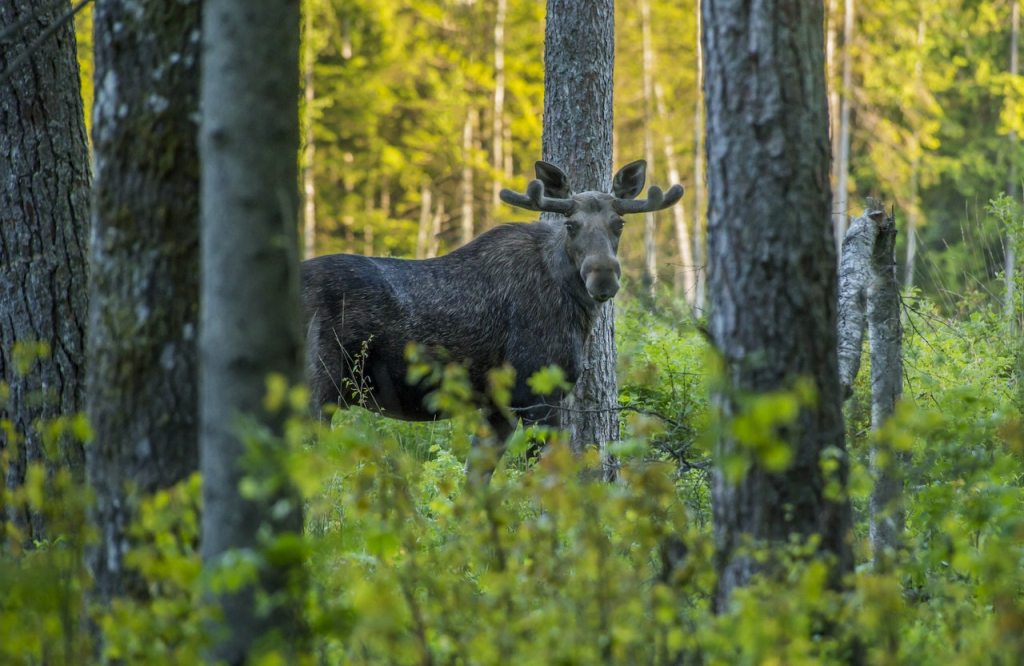 The Top Spots For Hunting Within The US